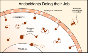 antioxidants-resized-600.gif